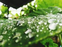 droplet arkivfoton