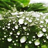 droplet arkivfoto