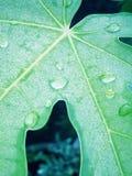 droplet Royaltyfri Bild
