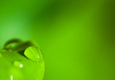 Droplet of Dew Stock Photography