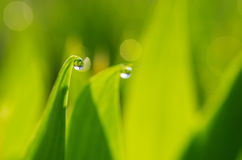 Droplet of Dew Stock Photos