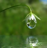 Droplet on flower Stock Images