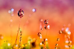 Droplet Grass background Orange purple drop water Royalty Free Stock Images