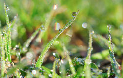 Droplet grass Stock Image