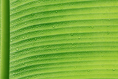 Droplet on green leaf Royalty Free Stock Photos