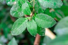 Droplet on leaf , fresh moment. Droplet on leaf branch , fresh moment Stock Photo