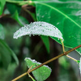 Droplet on leaf , fresh moment Royalty Free Stock Photos
