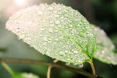 Droplet on leaf , fresh moment Royalty Free Stock Photo