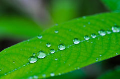 Droplet on the leaf Royalty Free Stock Photo