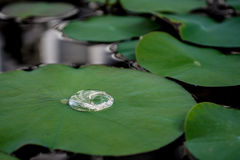 Droplet on the leaf Royalty Free Stock Images