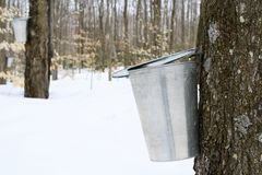 Droplet of maple sap falling into a pail royalty free stock photos