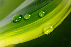 Droplet of morning dew on a leaf Royalty Free Stock Images