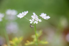 The droplet in morning. Mosquito in morning and a nice light Royalty Free Stock Photos