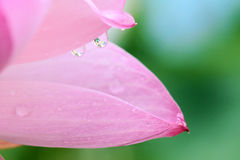 Droplet and petal Stock Images