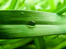Droplet surging down the blade of grass Stock Photography