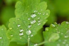 droplet Vatten leave Bakgrund arkivbilder