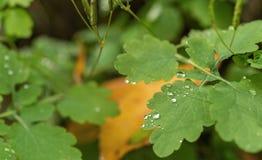 droplet Vatten Sidor Bakgrund arkivfoton