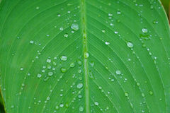 Droplet of water on green leaf Stock Photography