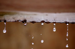Droplets. Some water dripping after a rainstorm Stock Photography