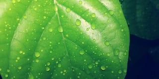 droplets arkivfoto