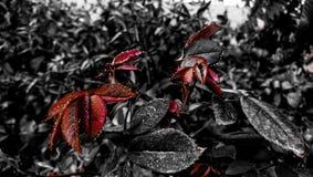 droplets royaltyfri fotografi