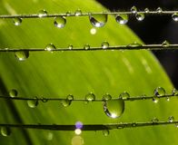 Droplets. Dew drops on grass strings, extreme macro stock photo