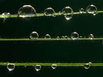 Droplets. Dew drops on grass strings, extreme macro Royalty Free Stock Photo