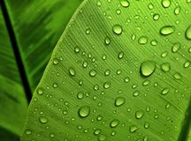 Droplets. Beautiful droplets on leaf on rainy day Stock Photos