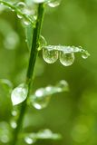 Droplets on branch Royalty Free Stock Image