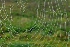 Droplets on Cobweb Royalty Free Stock Photography