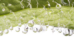 Droplets detail on leaf. Water droplets closeup on fresh leaf Stock Photos