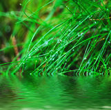 Droplets of dew on the grass. Droplets of dew on the green grass, shallow depth of field, natural abstract background Stock Photo