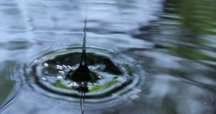 Droplets Fall into Water stock video footage