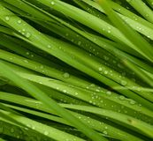Droplets on grass Stock Photo