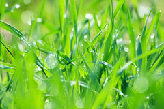 Droplets on the grass Stock Photos