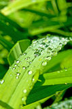 Droplets on grass Stock Photos