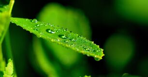 Droplets on Green Leaf in Close Up Photograph Stock Photos