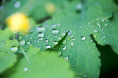 Droplets on green leaf, macro shoot. Beautiful droplets on green leaf, macro shoot Stock Photography