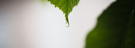Droplets on green leaf, macro shoot. Beautiful droplets on green leaf, macro shoot Royalty Free Stock Images