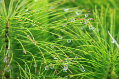 Droplets on green vegetation royalty free stock photos
