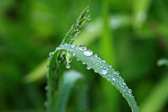 Droplets on green vegetation Stock Image