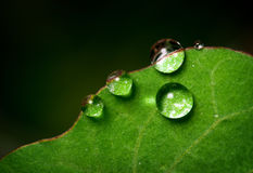 Droplets on leaf Stock Photography