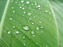 Droplets on a leaf. Droplets on a green leaf stock image