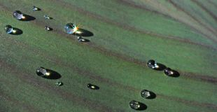 Droplets on Leaf Royalty Free Stock Photo