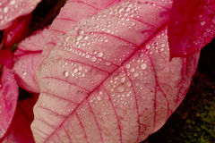 Droplets on leaf Royalty Free Stock Photos