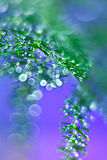 Droplets Light. Drops of water on green leaves of asparagus plant Royalty Free Stock Images