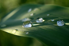 Droplets on Plant. Round water droplets on a green plant Royalty Free Stock Photo