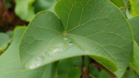 Droplets of rain stock photo
