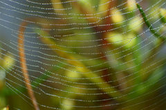 Droplets spider web Royalty Free Stock Images