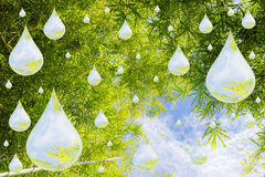 Droplets of water in nature Stock Photography